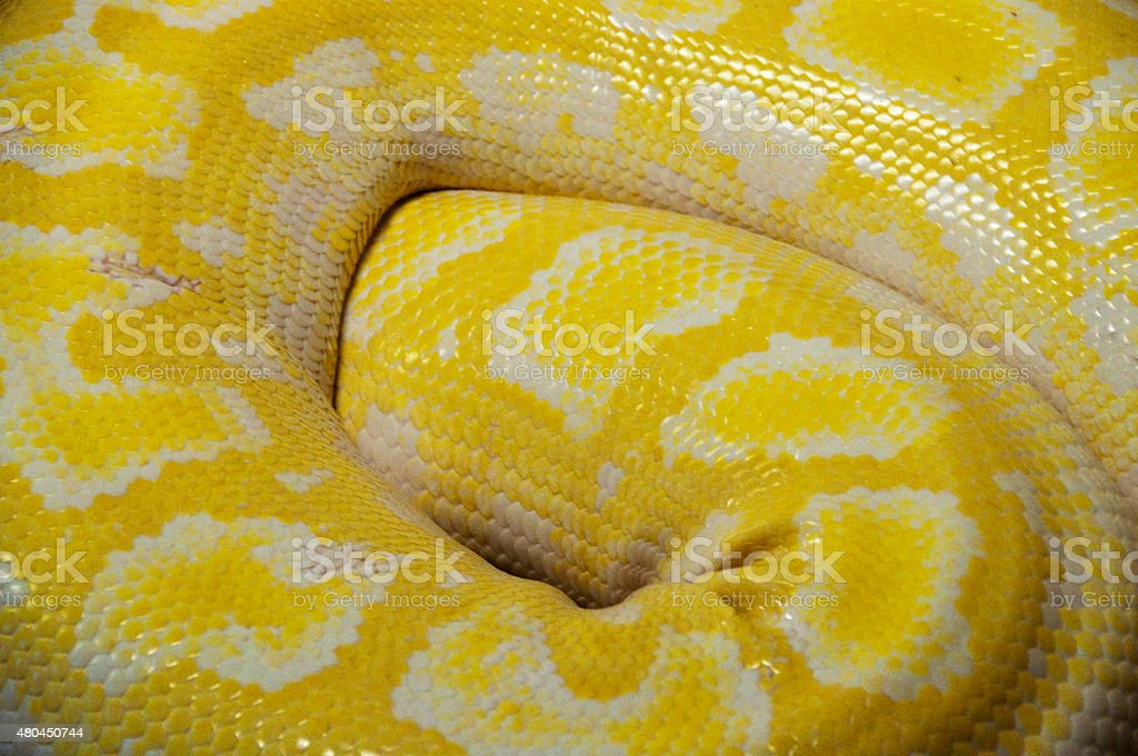 Close up of snake skin stock photo