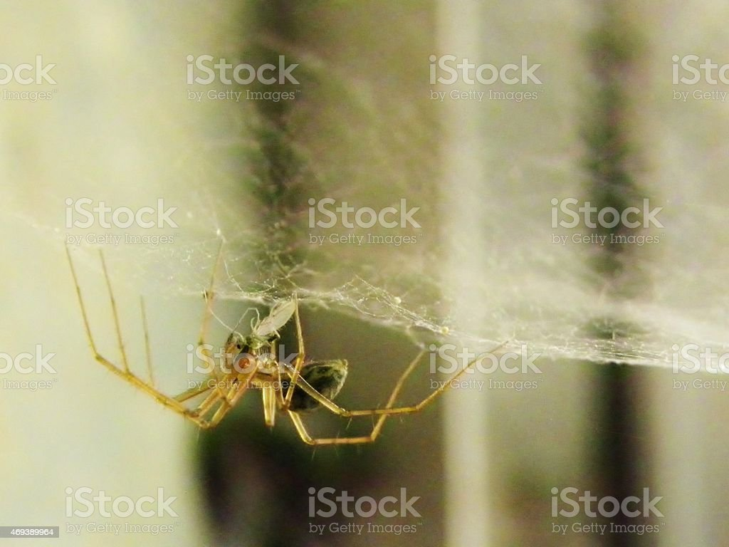 Close up of Spider stock photo