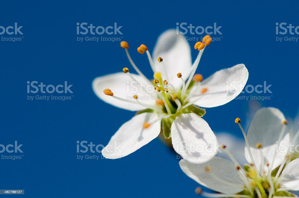 Close up of spring royalty-free stock photo