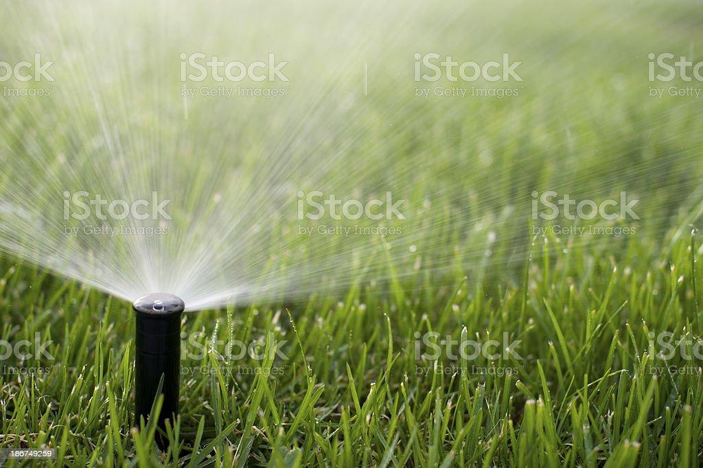 Close up of sprinkler spraying grass stock photo