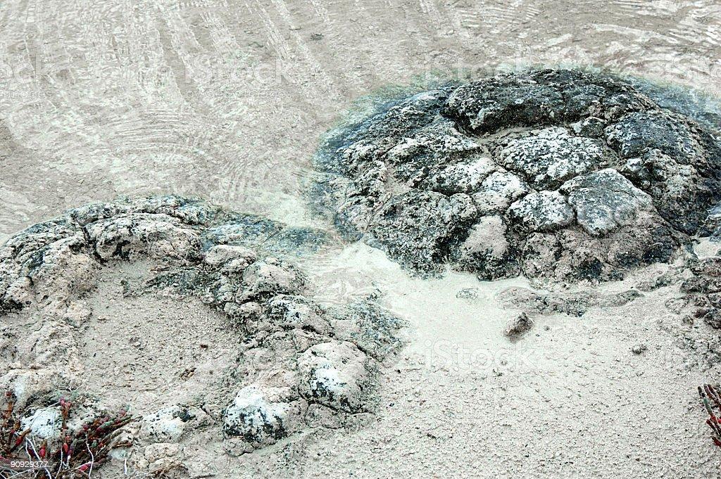 Close up of Stromatolites stock photo