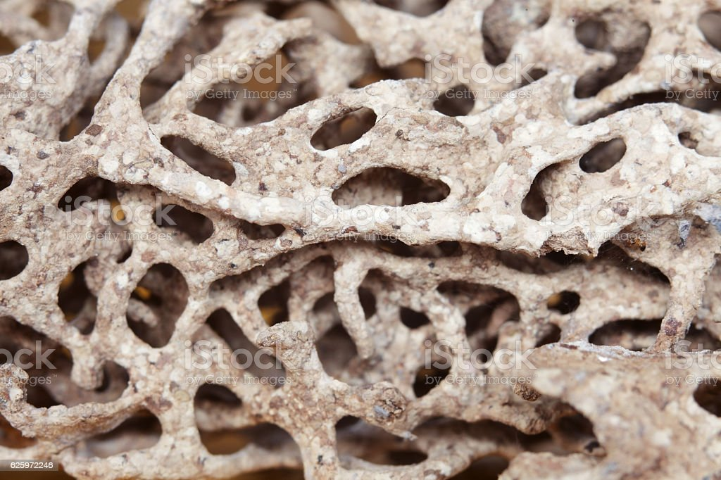 close up of termite nest background. stock photo