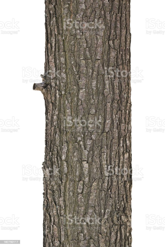 Close up of the bark on a tree trunk stock photo