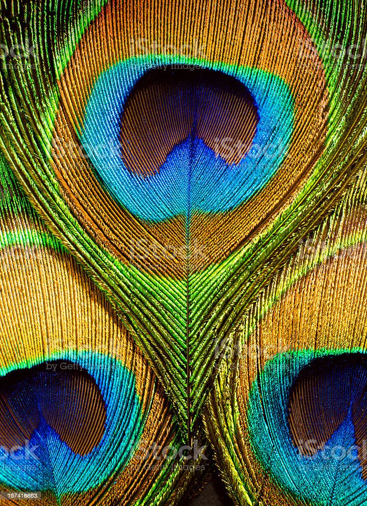 Close up of the eye on peacock feathers stock photo