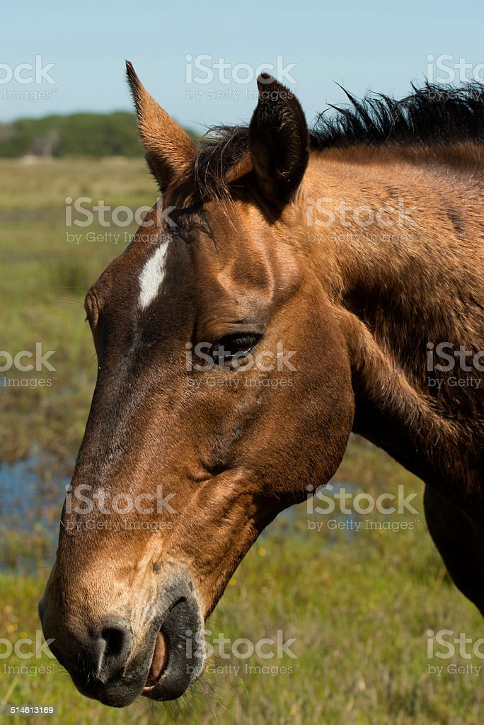 close up of the head of a Wild horse stock photo
