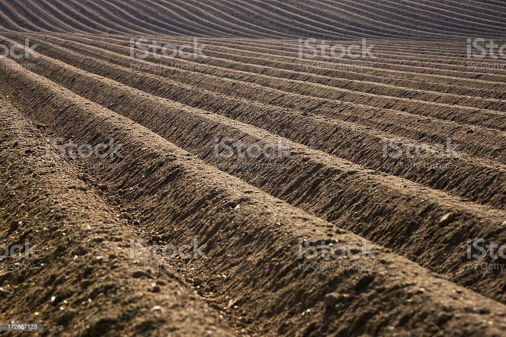 Close up of the rows in a plowed field royalty-free stock photo