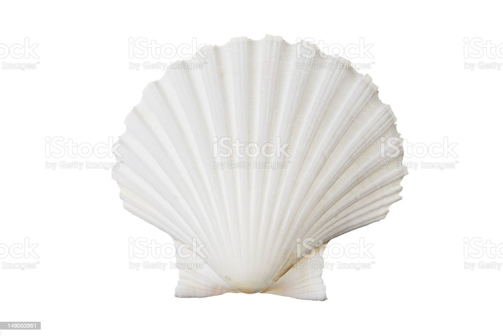 Close up of the texture of a white shell stock photo