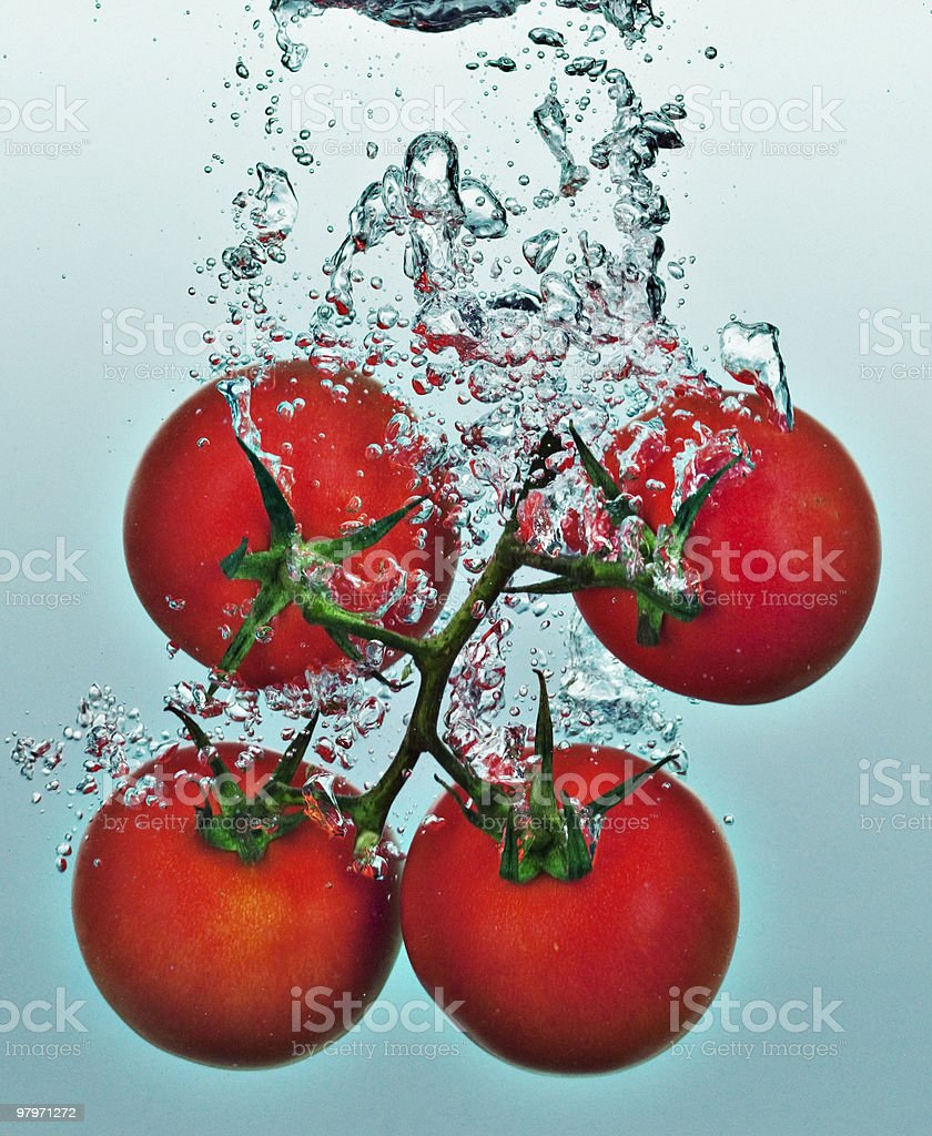 Close up of tomatoes on vine splashing in water royalty-free stock photo