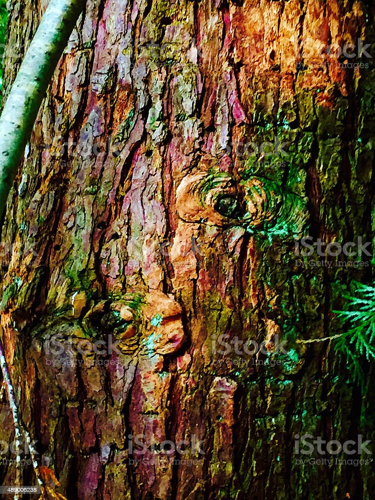 Close up of tree knot in the forest royalty-free stock photo