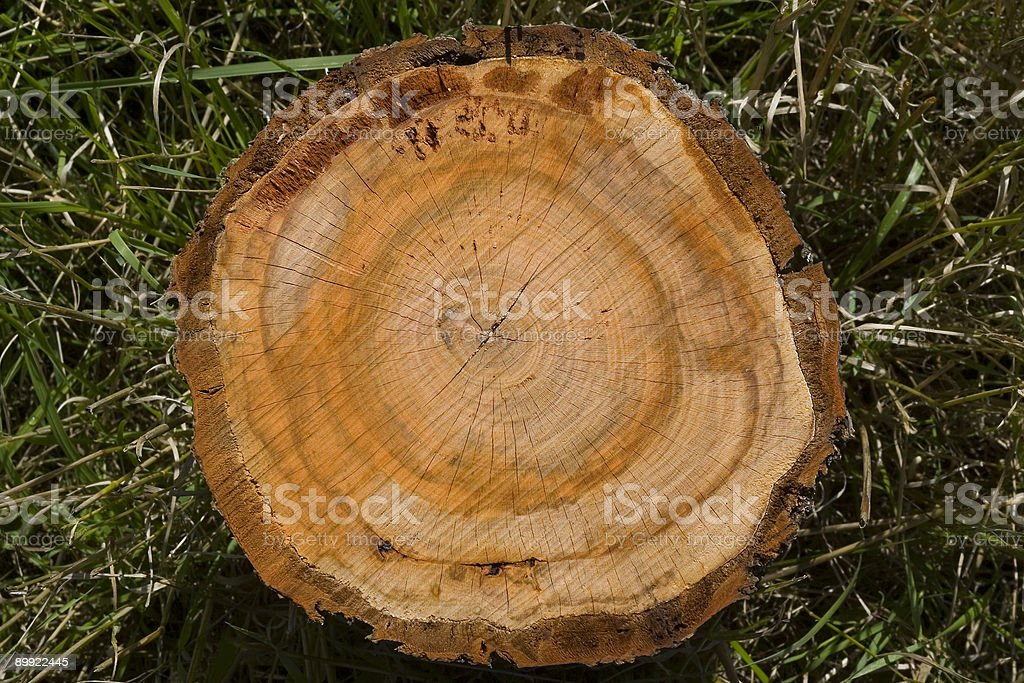 Close up of Tree Rings on Felled Stump royalty-free stock photo