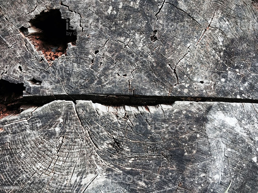 Close up of tree stump background royalty-free stock photo