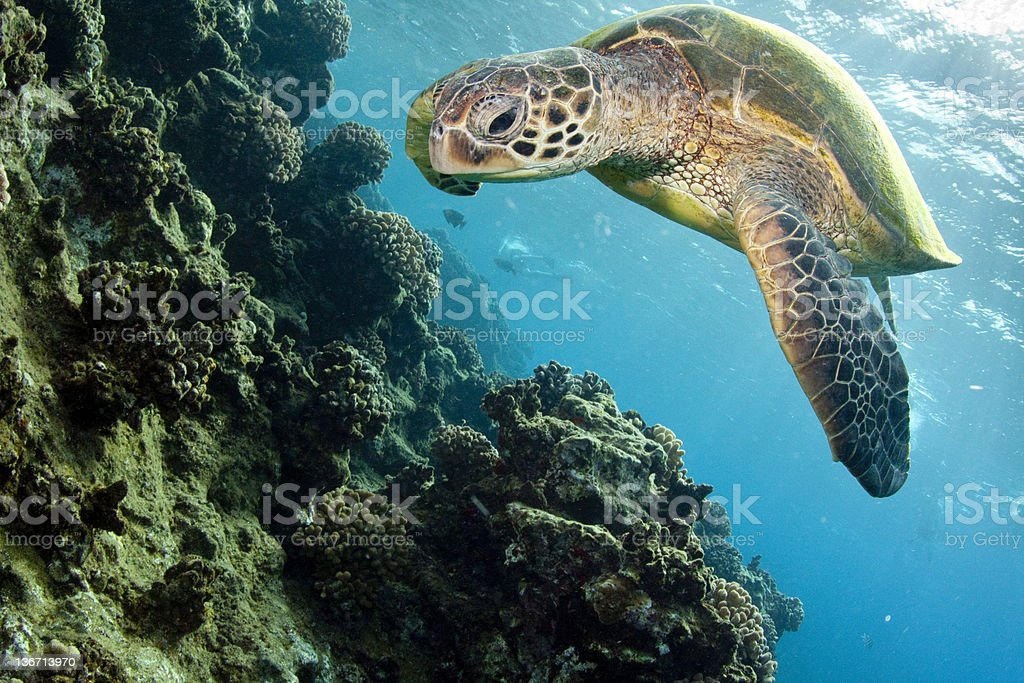 Close up of turtle stock photo