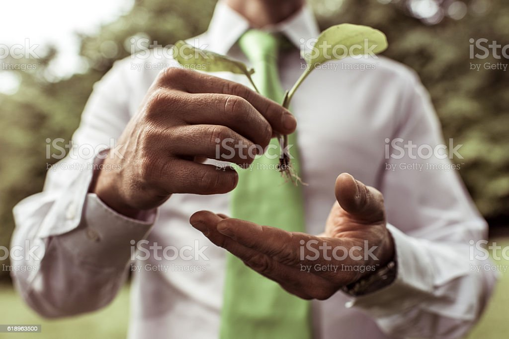 Close up of unrecognizable business person holding a plant. stock photo