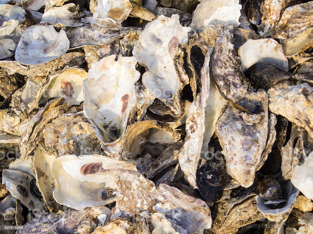 Close up of waste oysters shells on island Sado, Japan stock photo