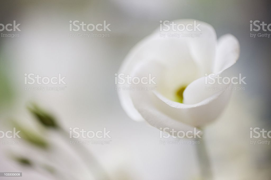 Close up of white flower stock photo