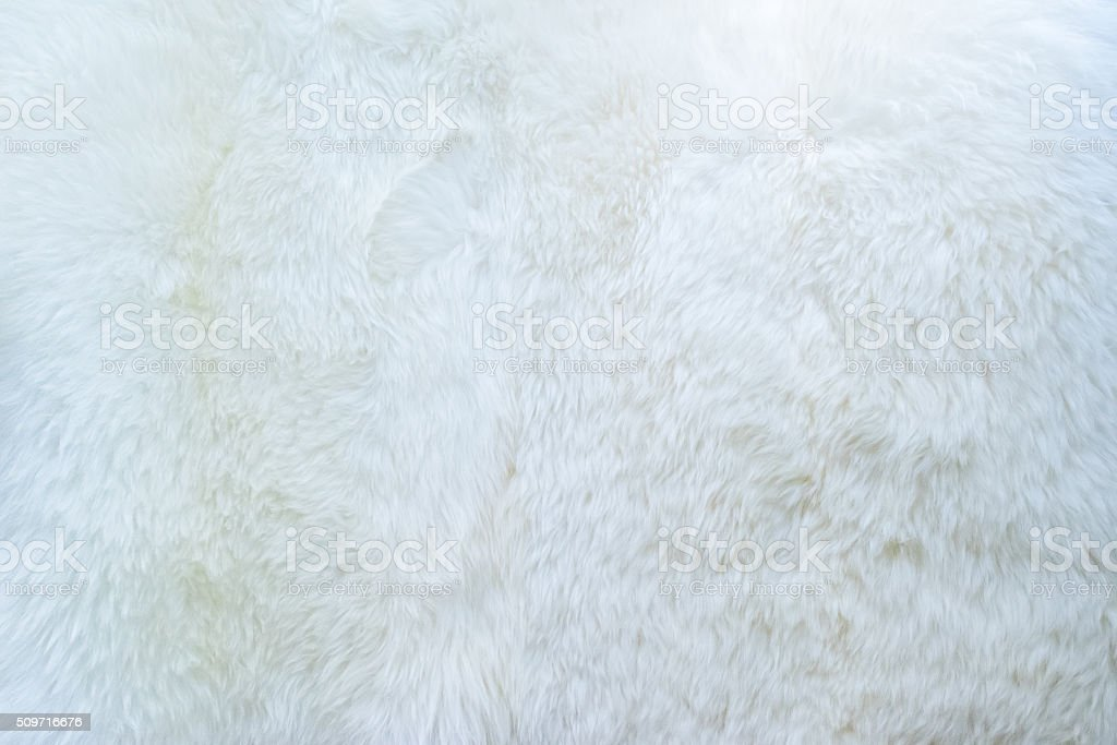 close up of white real sheep skin texture background. stock photo