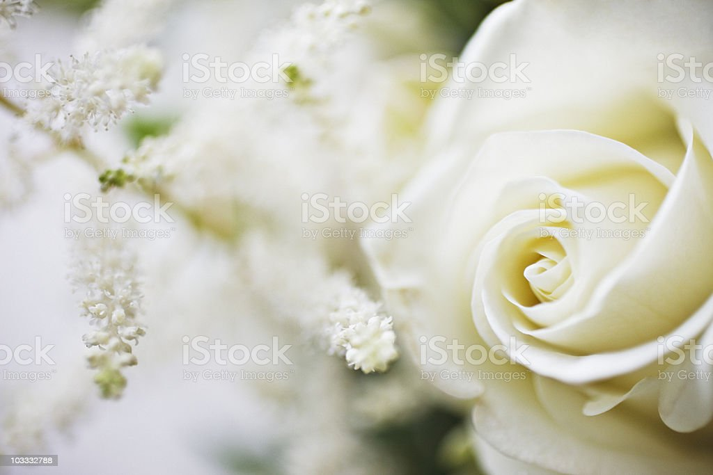 Close up of white rose and white flowers stock photo