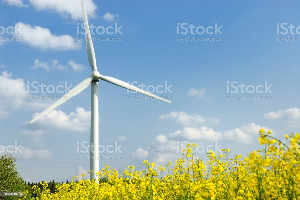 Close up of wind turbine in yellow field of flowers royalty-free stock photo