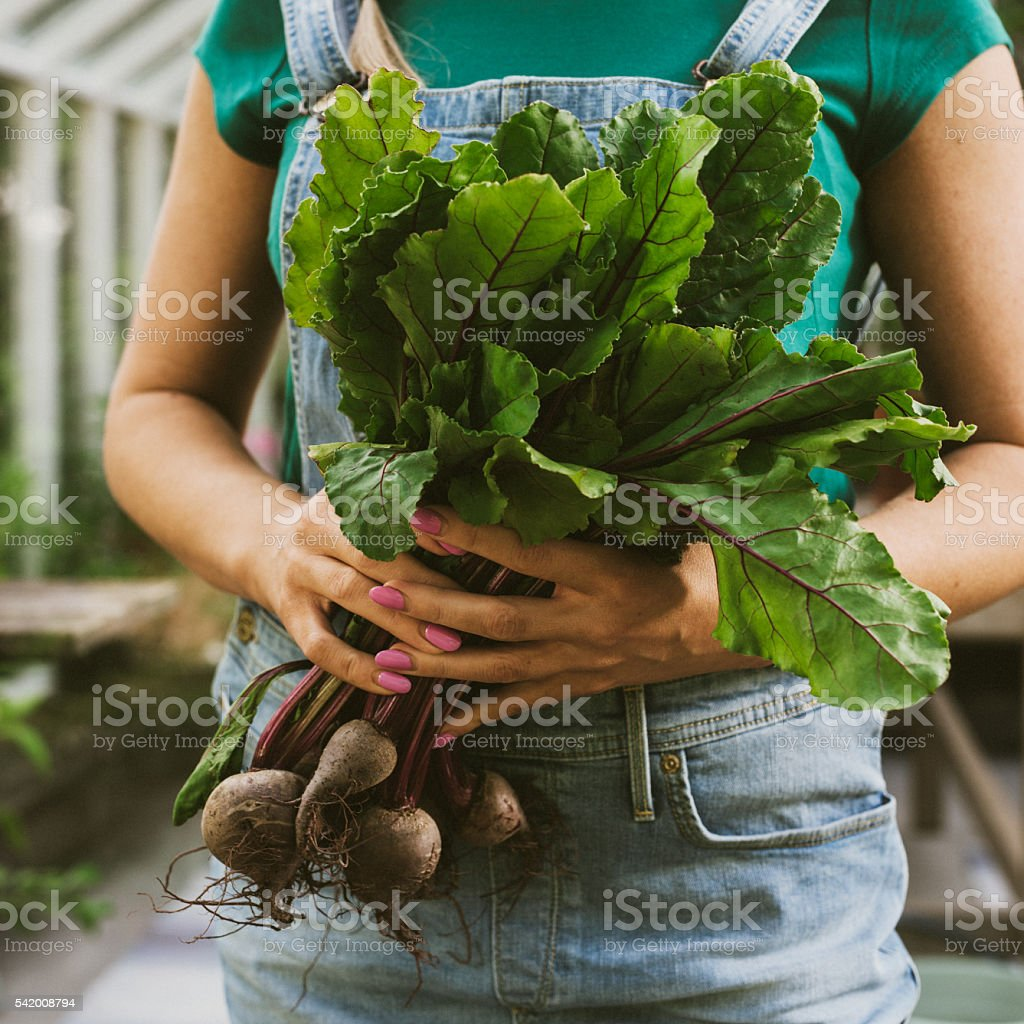 Close up of woman gardening with fresh beetroot vegetable stock photo