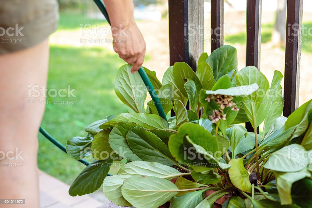 Close up of woman watering potted plants outdoors foto royalty-free