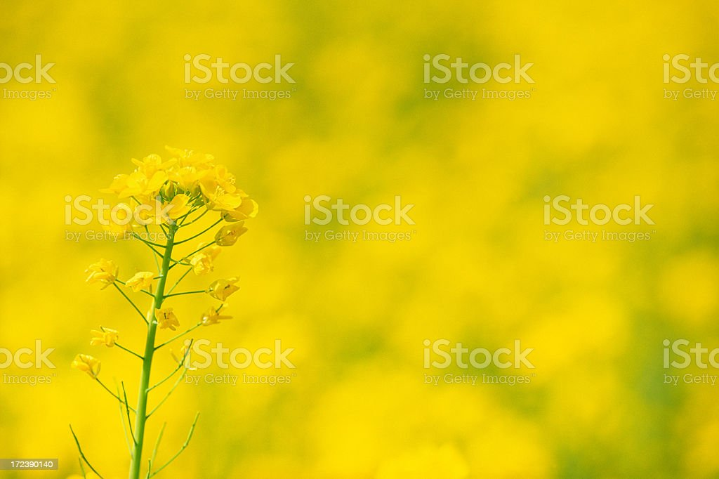 Close up of yellow flower royalty-free stock photo