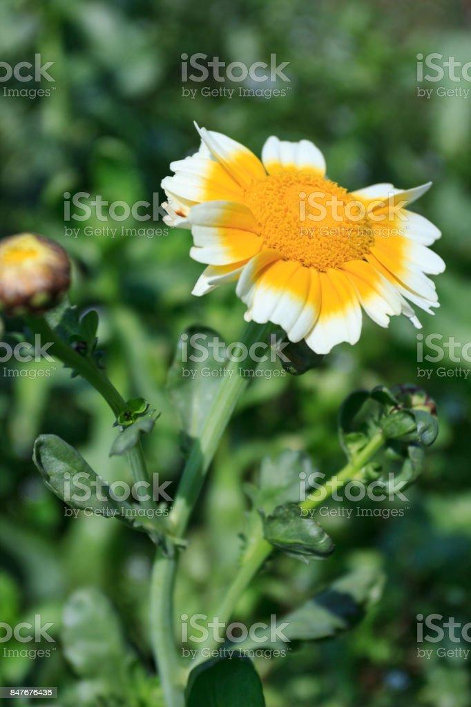 Close up of yellow flower under sunshine stock photo