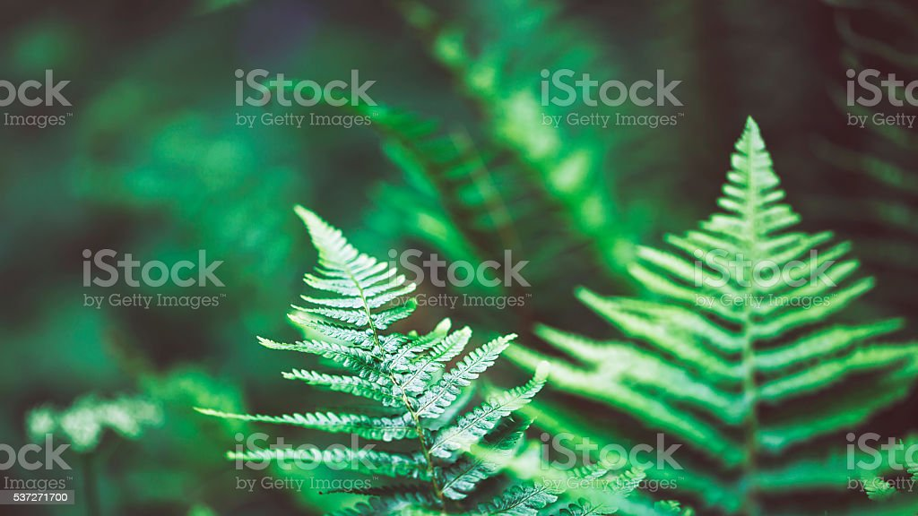 Close up of young fern stock photo