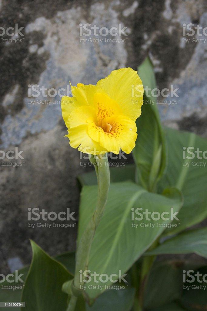 Nahaufnahme auf einer gelben Blume – Foto
