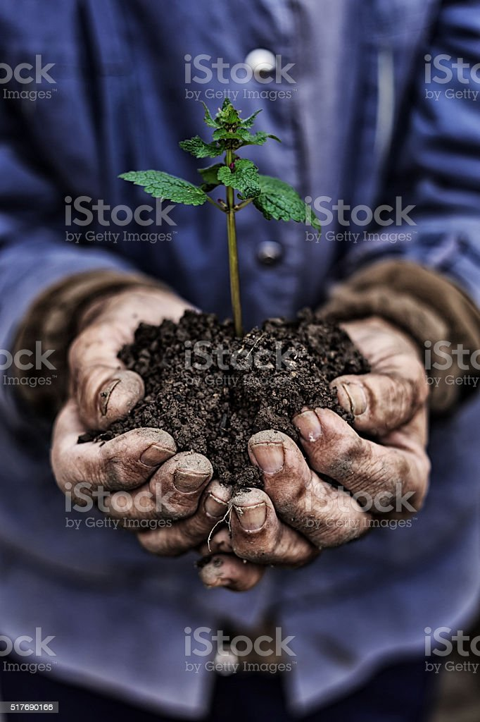 Close up on old man's hands holding new growth stock photo