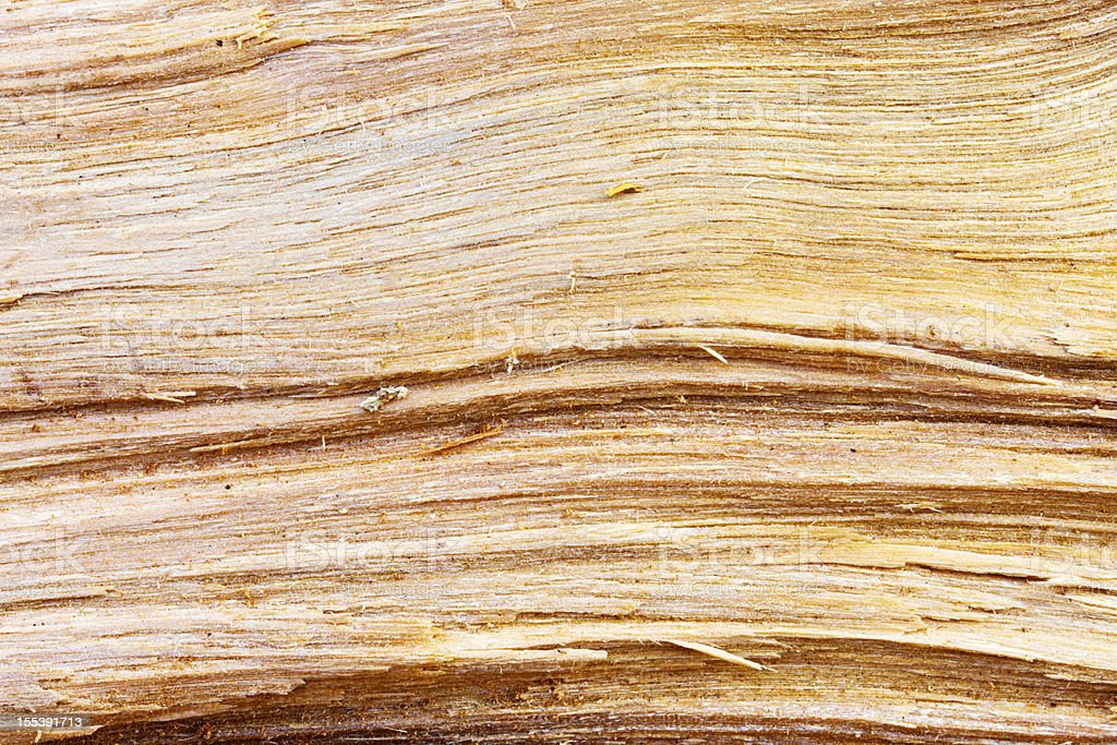 Close up on roughly chopped wooden log stock photo