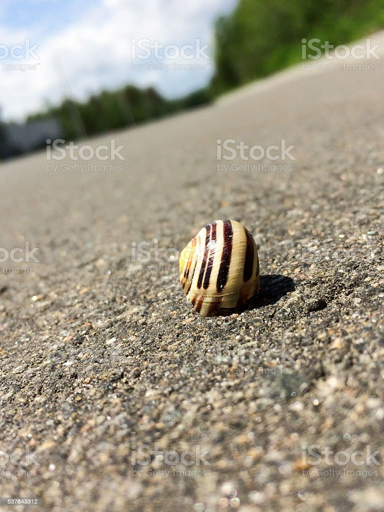 Close up on snail resting in the middle of raod stock photo