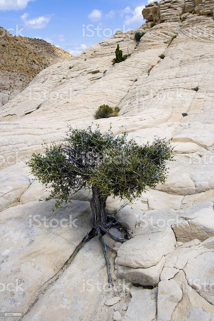 Close up on the Rocks with a Small Tree royalty-free stock photo
