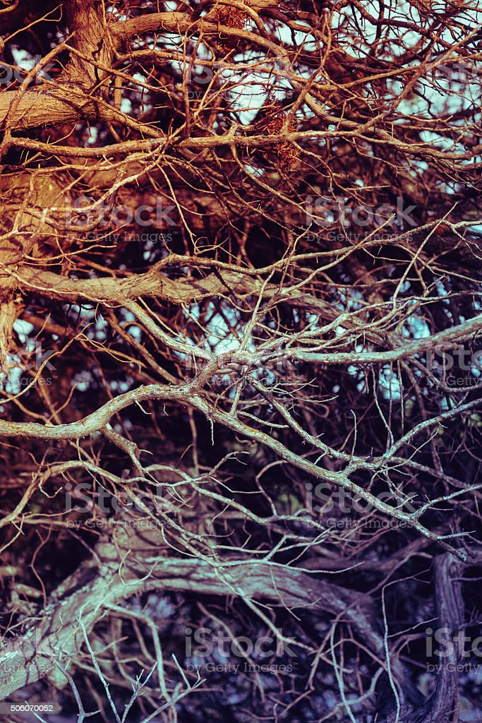 Close up on twisted leafless branches. Vintage filtered, organic stock photo