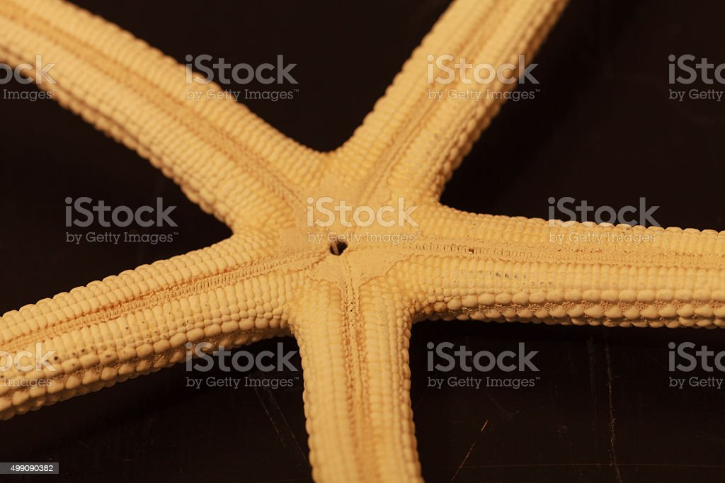 Close up on white Finger Starfish stock photo