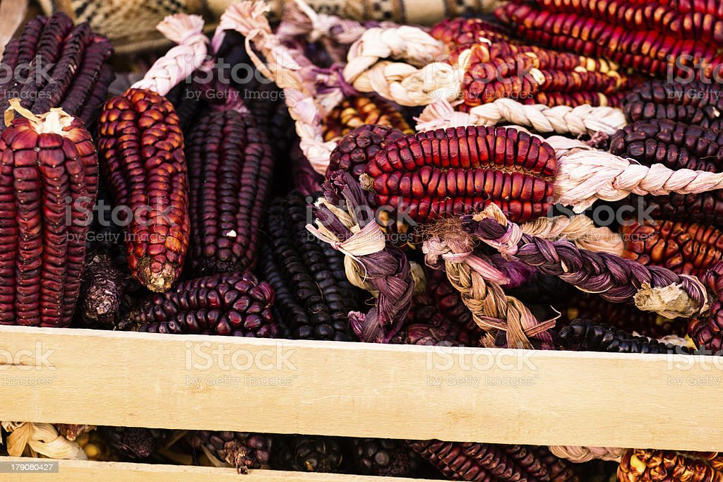 Close up or Cheerful and Colorful dried Indian Corn stock photo