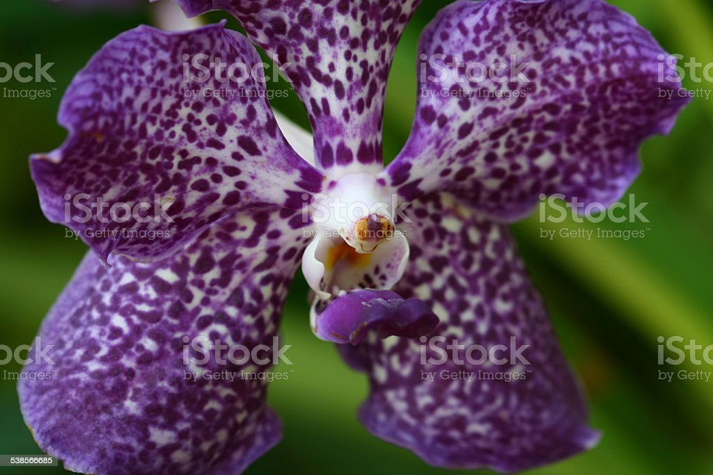 close up orchid in garden, colorful flower stock photo