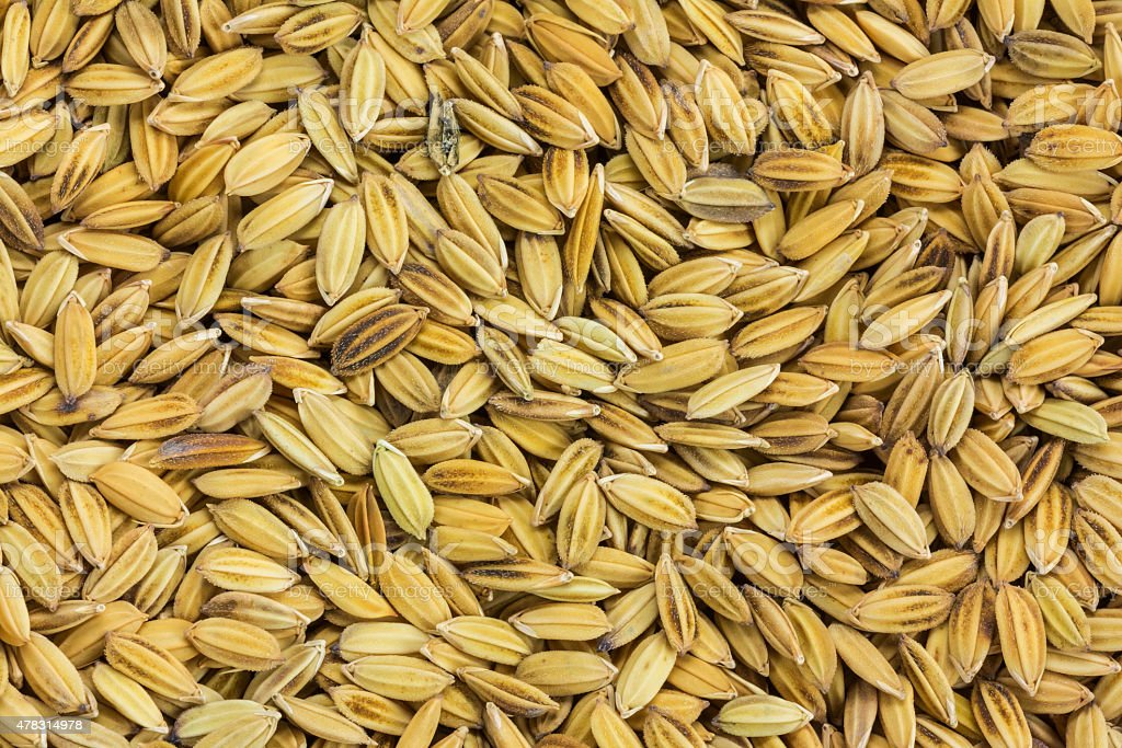 Close up paddy rice for background royalty-free stock photo