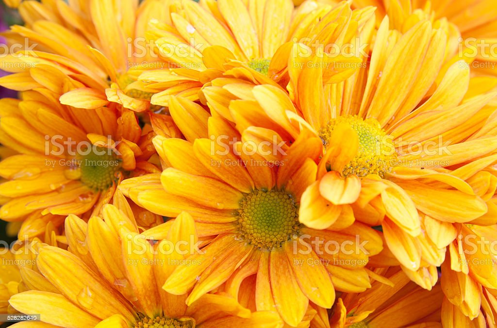 Close up petal of orange flower royalty-free stock photo