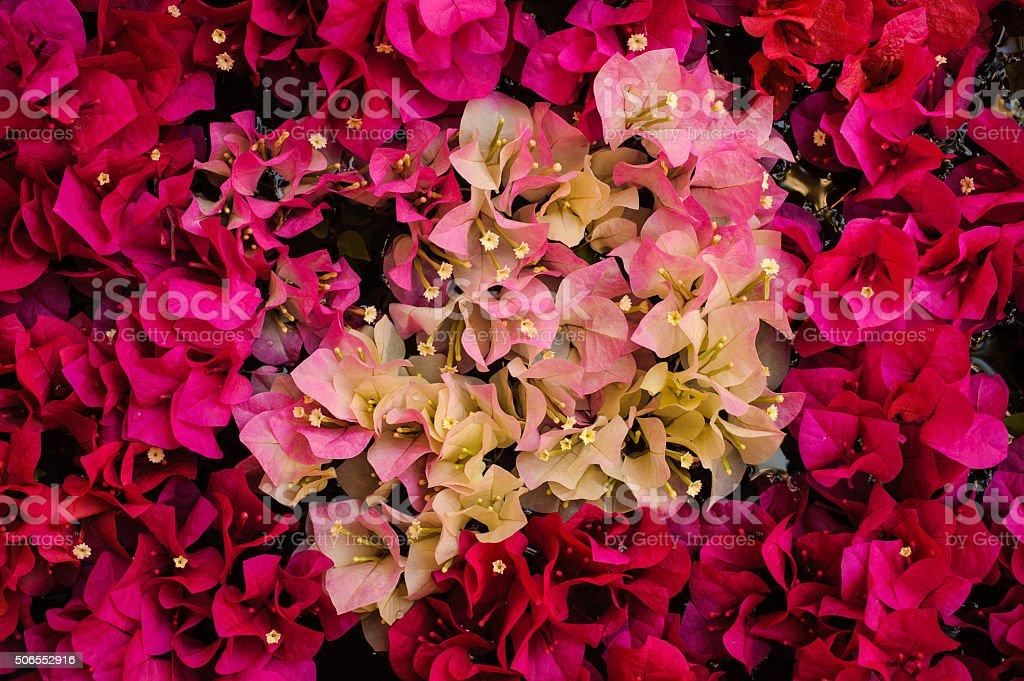Цвет ярко-лиловый фото