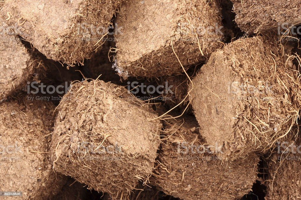 Close up - Plant fibers stock photo
