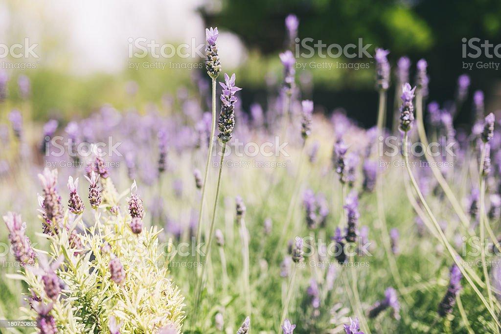 Close up plants royalty-free stock photo