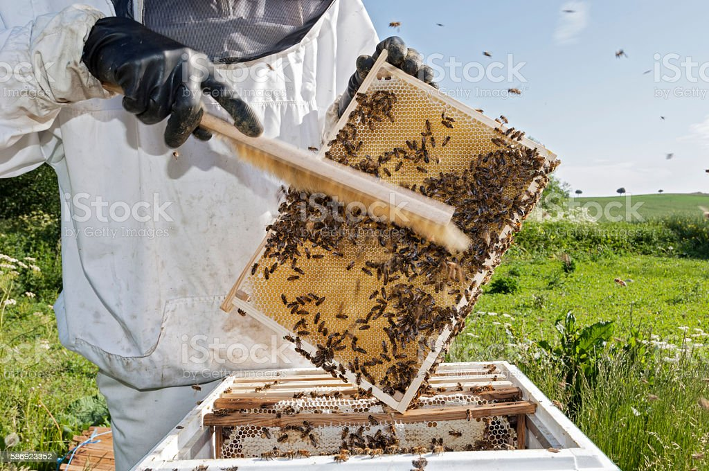 Close Up Portrait of a Beekeeper at Work stock photo
