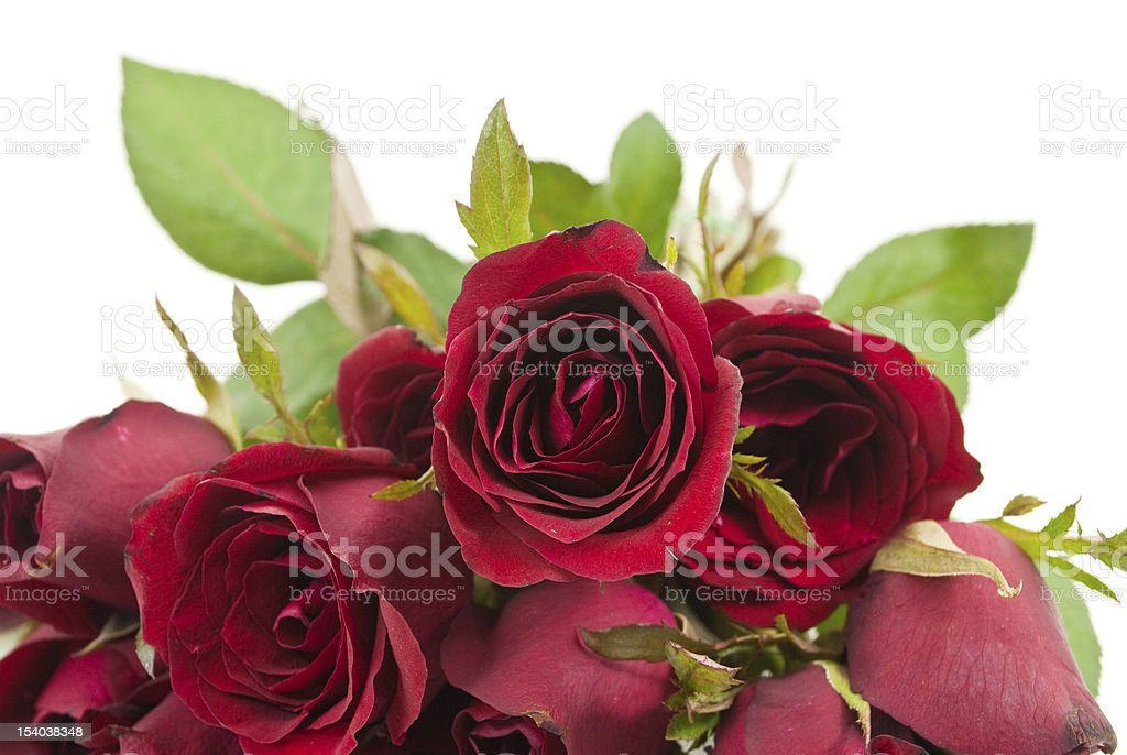 Close up red rose. stock photo