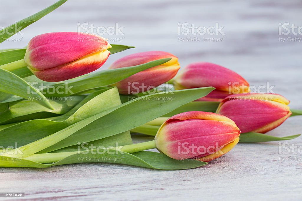 Close Up Red Tulips on White Wood Table stock photo