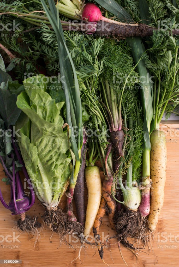 Close up root vegetables. stock photo