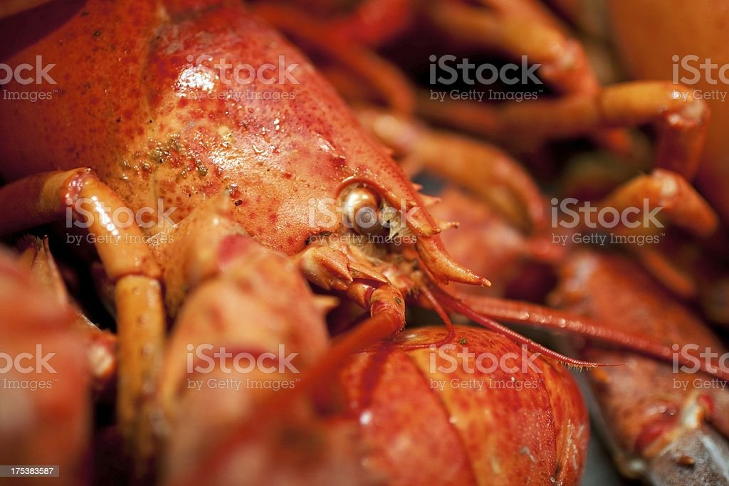 Close up shot of a cooked Lobster stock photo