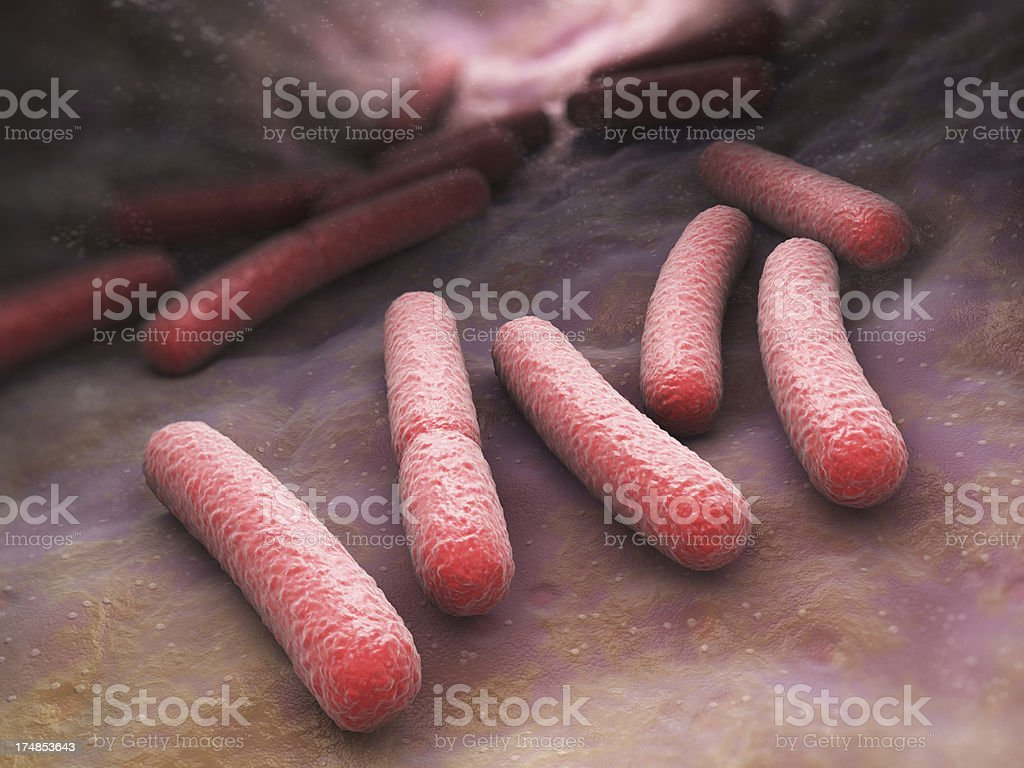 Close up shot of Escherichia coli bacteria cells stock photo