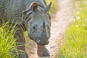 close up shot of Indian Rhinoceros
