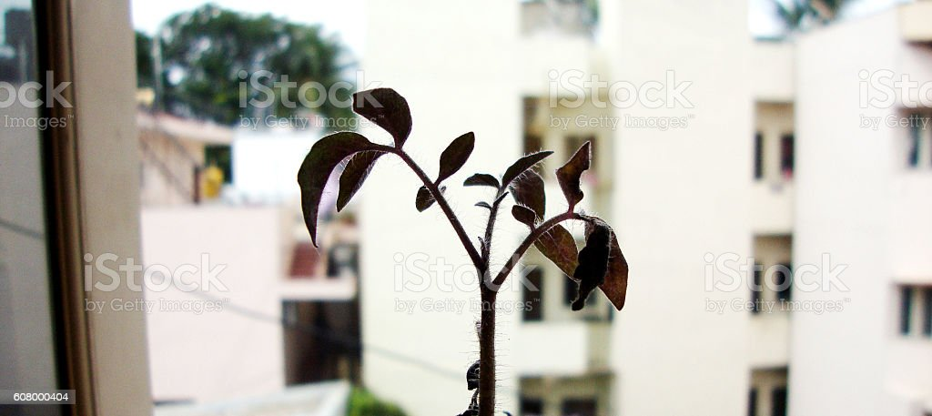 Close up shot of Small Plant stock photo