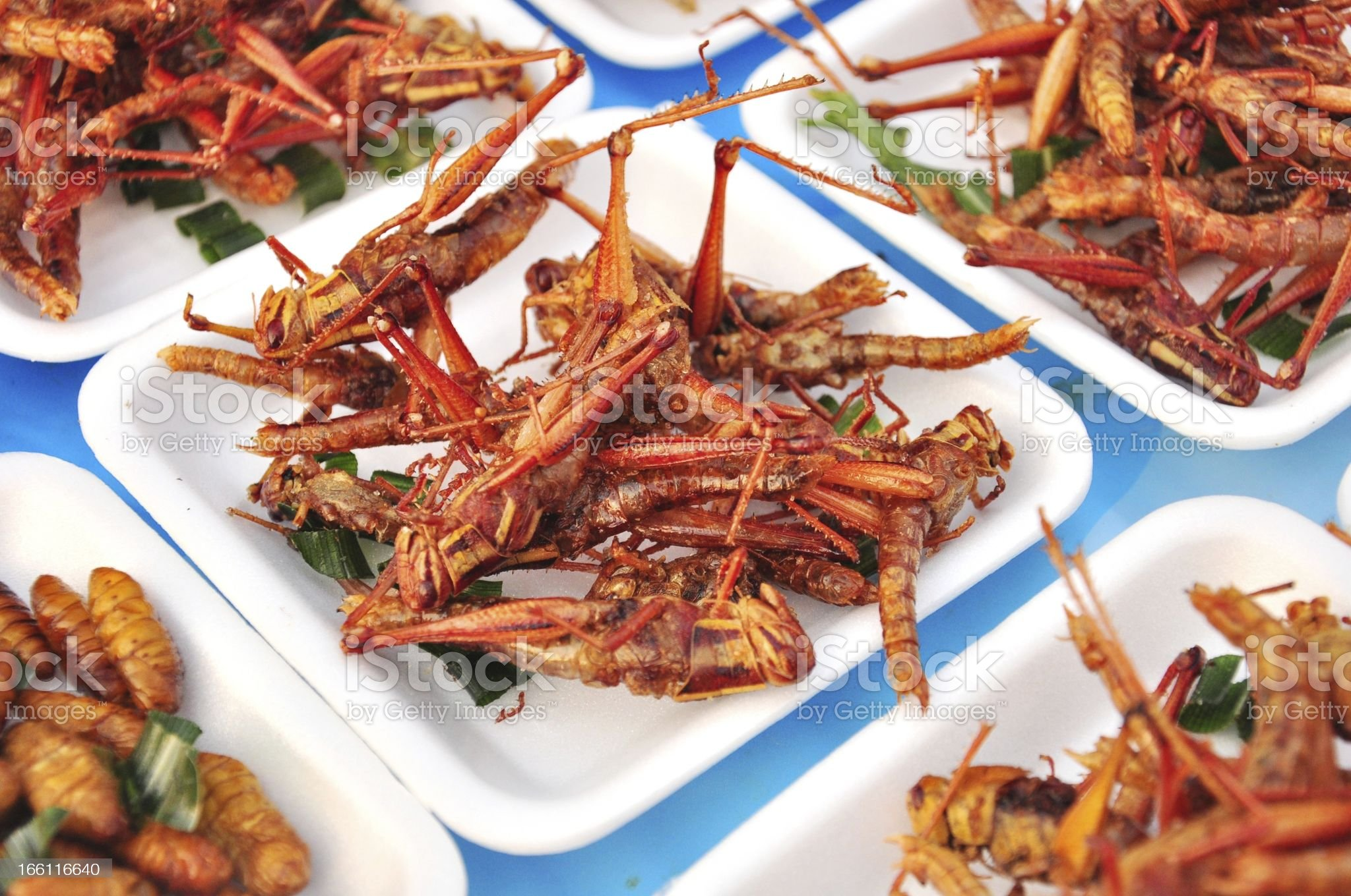 close up special food , Fried grasshoppers royalty-free stock photo